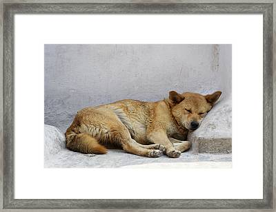 Dog Sleeping Framed Print by Dutourdumonde Photography