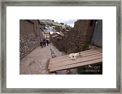 Dog Sleeping In Alley Framed Print