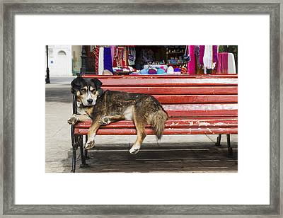Dog Sleeping On A Red Bench Punta Framed Print