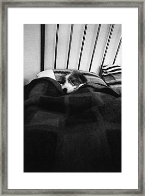 Dog Sleeping Framed Print by Stephen Feldman