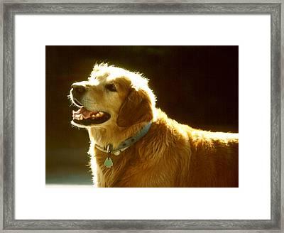 Dog Smile Framed Print by Robert  Rodvik
