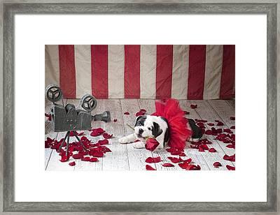 Dog Star Framed Print