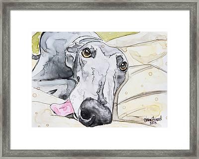 Dog Tired Framed Print by Shaina Stinard