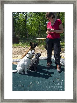 Dog Trainer, Wolf Science Center, Austria Framed Print by Louise Murray