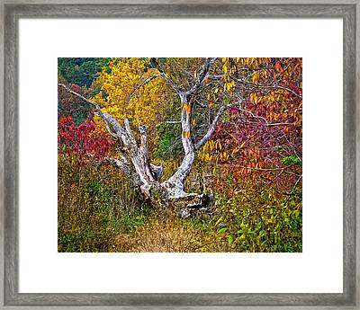 Framed Print featuring the digital art Dog Tree by Mary Almond