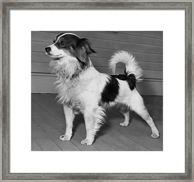 Dog Up For Adoption Framed Print