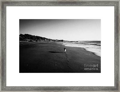 Dog Walking Along Sandy Beach On The Pacific Ocean Los Pellines Chile Framed Print by Joe Fox