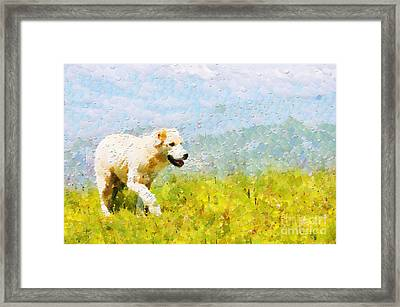 Dog Walking By Grass Painting Framed Print by Magomed Magomedagaev