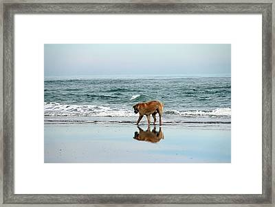 Dog Walking Framed Print by Cynthia Guinn