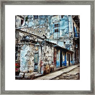 Dog Watching - Havana Framed Print