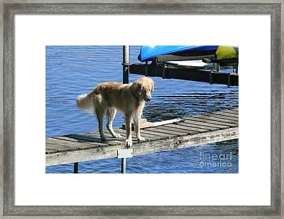 Dog Watching Fish Framed Print