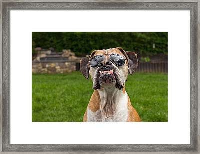 Dog Wearing Sunglass Framed Print by Stephanie McDowell