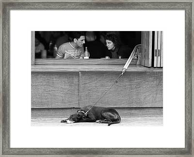 Dog What Dog Framed Print by Stephen Norris