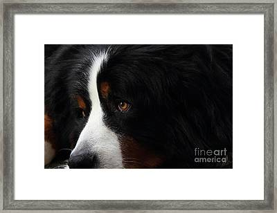Dog Framed Print by Wingsdomain Art and Photography