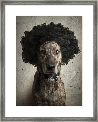 Dog With A Crazy Hairdo Framed Print by Chad Latta