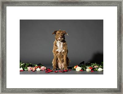 Dog With Flowers Framed Print
