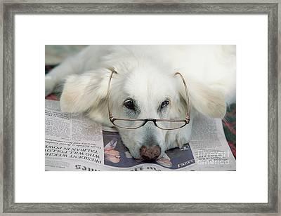 Dog And The News Framed Print by Yva Momatiuk John Eastcott
