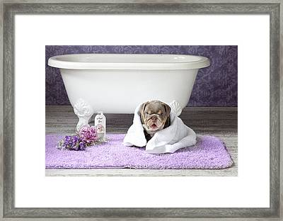 Dog With Towel 2 Framed Print by Lisa Jane
