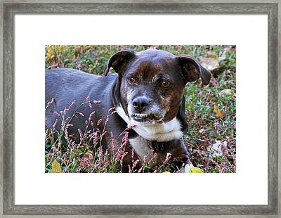 Framed Print featuring the photograph Dogg by Bonnie Willis