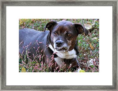 Dogg Framed Print by Bonnie Willis