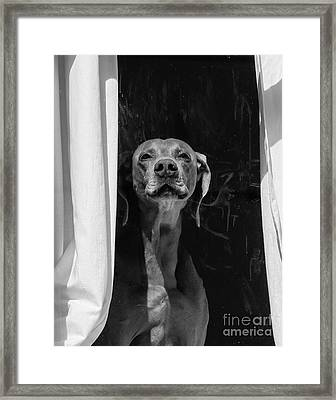 Doggie In The Window Framed Print by Robert Yaeger