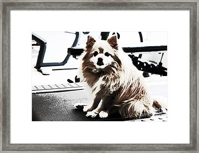 Doggie No Need For Treadmill Framed Print by Charline Xia