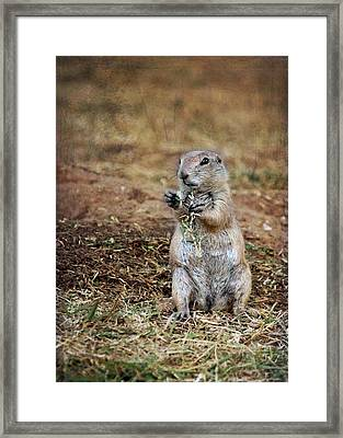 Framed Print featuring the photograph Doggie Snack by Jemmy Archer