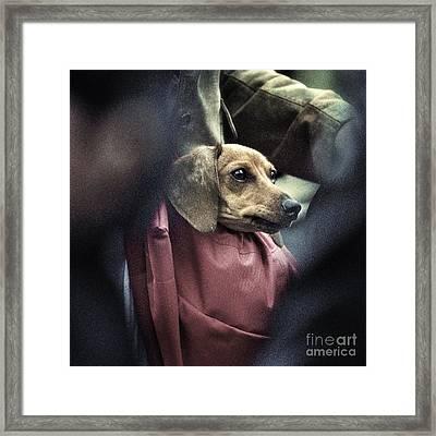 Doggie's Bag Framed Print by Michel Verhoef