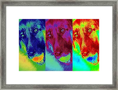 Doggy Doggy Doggy Framed Print