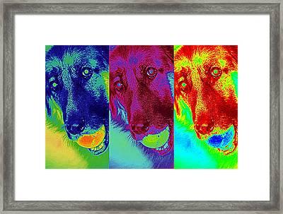 Doggy Doggy Doggy Framed Print by Cathy Shiflett