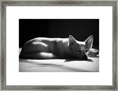 Doggy Dreamin' Framed Print
