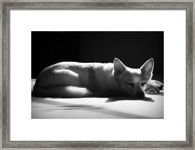 Doggy Dreamin' Framed Print by Mandy Shupp