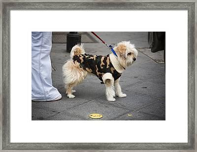 Doggy Sweater Framed Print
