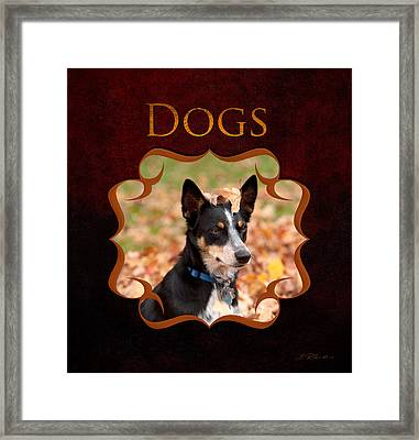 Dogs And Puppies Framed Print