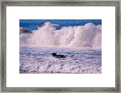 Dogs At Carmel California Beach Framed Print by Barbara Snyder