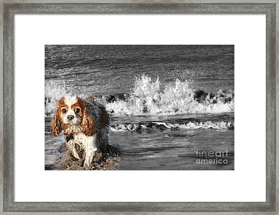 Dogs Enjoying The Sea Framed Print by Jo Collins