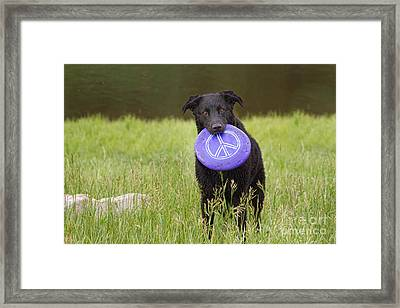 Dogs For Peace Too Framed Print by James BO  Insogna