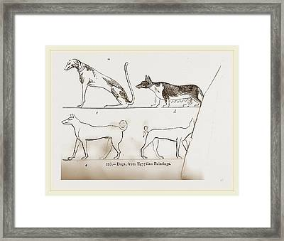 Dogs, From Egyptian Paintings Framed Print by Litz Collection