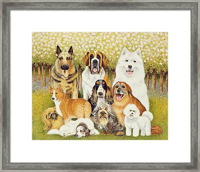Dogs In May Framed Print by Pat Scott