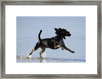 Dogs Just Wanna Have Fun Framed Print by Noel Elliot