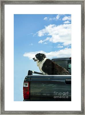 Dogs Love Trucks Framed Print by Diane Diederich