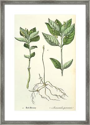Dog's Mercury Framed Print by Sheila Terry/science Photo Library