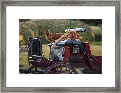 Dogs Of The Carriage Framed Print