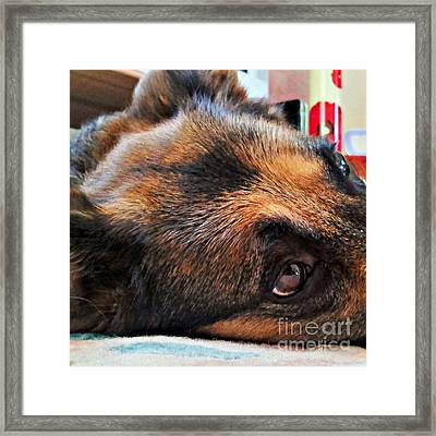 #dogs #pawsforthought #ilovemydog Framed Print