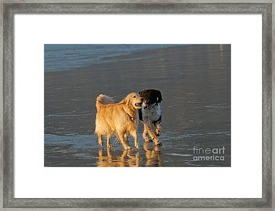 Dogs Playing On Ocean Beach Framed Print