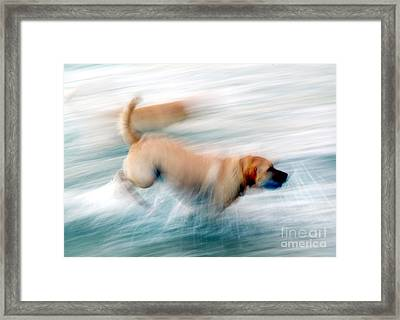 Dogs Running In Sea. Framed Print