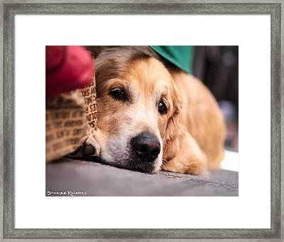 Framed Print featuring the photograph Dog's Sorrow by Stwayne Keubrick