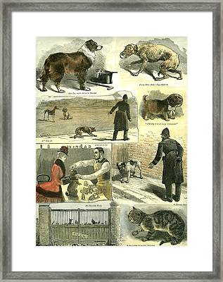 Dogs U.k. Police Regulations 1885 Cat Man Woman Hat Cane Framed Print
