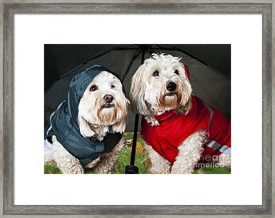 Dogs Under Umbrella Framed Print by Elena Elisseeva