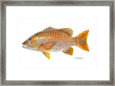 Dogtooth Snapper Framed Print by Carey Chen